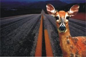 """""""Frozen like a deer in headlights"""""""